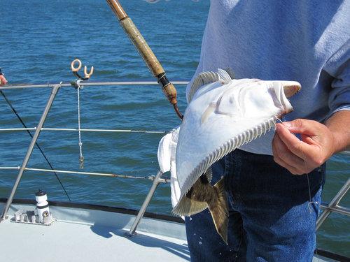 Halibut Fishing Washington State