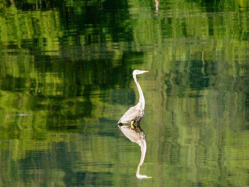 Bird watching in Sequim Bay State Park