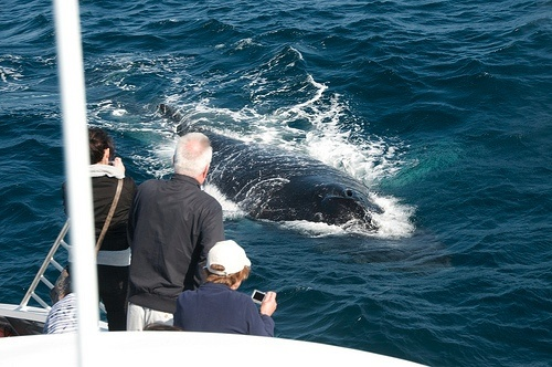 Whale Watching in Washington State: a must-do on your visit to the coast