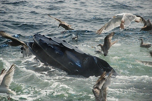 Whale watching in Washington State: an unforgettable experience!