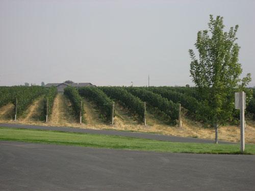 Washington State Wine Clubs